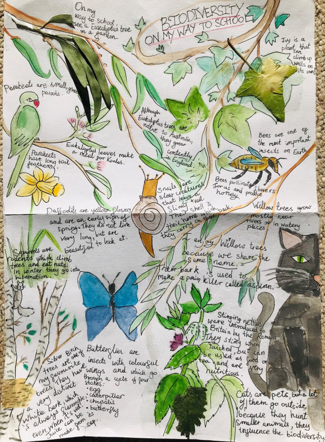 A poster with a white background, covered with drawings of tree branches, leaves, flowers, birds and insects, labelled with descriptions. The poster is titled Biodiversity on my way to school.